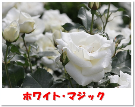 H_IMG_7591.jpg