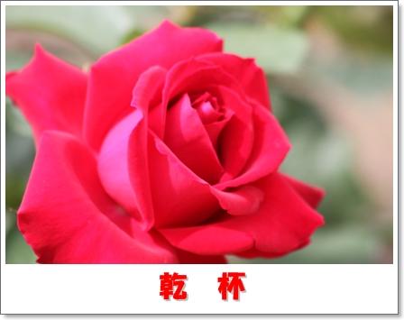 H_IMG_7598.jpg
