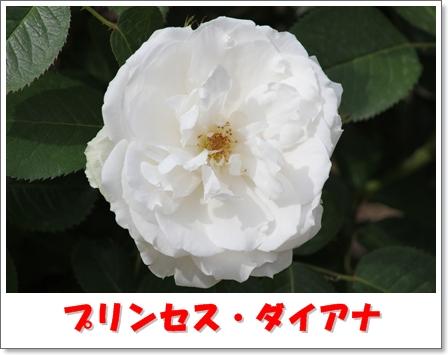 H_IMG_7609.jpg