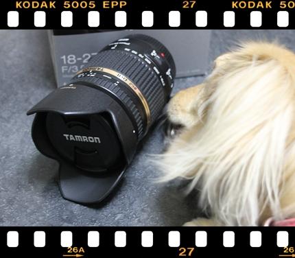 lens_ribbon.jpg