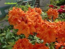 CIMG4246_20120513071151.jpg