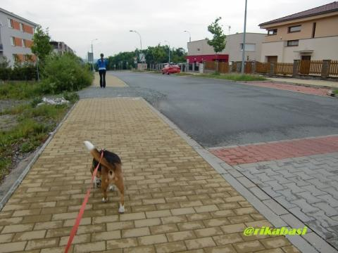 CIMG4280_20120513062501.jpg
