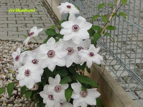 CIMG4281_20120513062459.jpg