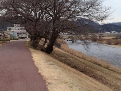 130119多治見土岐川河畔