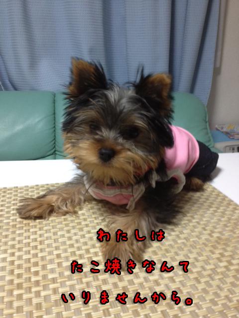 20120617-005.jpg