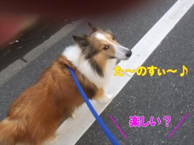 た~のすぃ~♪