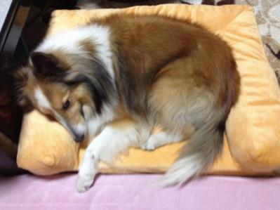 ベッド使用~(昼)