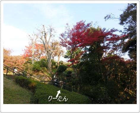 城山公園12