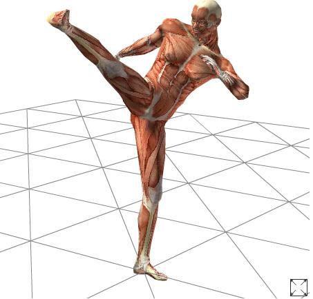 人体 デッサン 3D