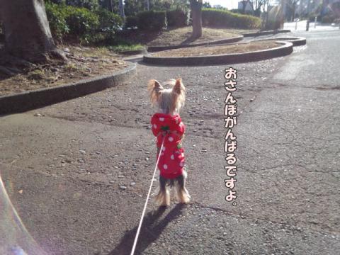 お散歩道①