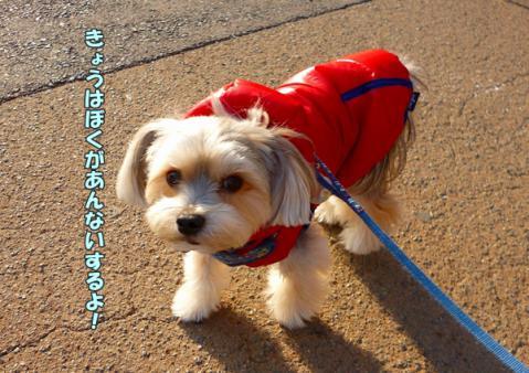 お散歩道④