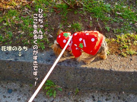 お散歩道⑮