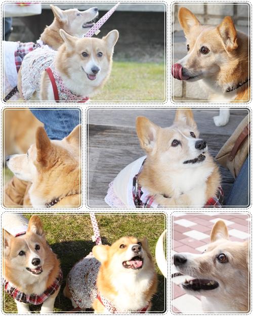 はなちゃん&チェルちゃん☆
