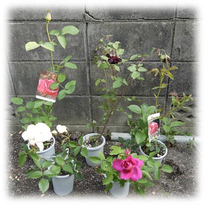 薔薇とCOCOの気まぐれ日記 201205