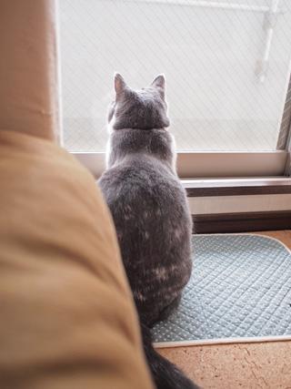 窓開けてほしいなぁ…