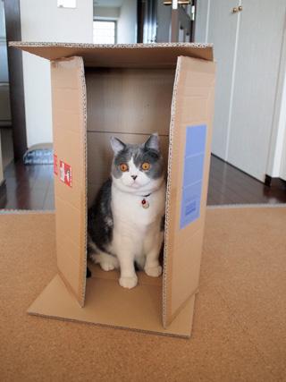 箱入りました!