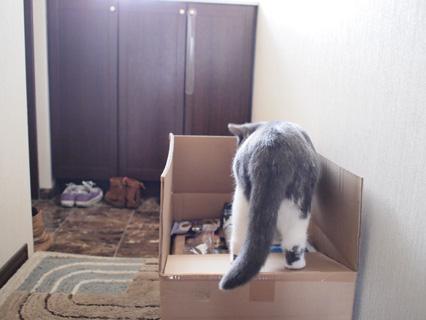 いい箱だ…