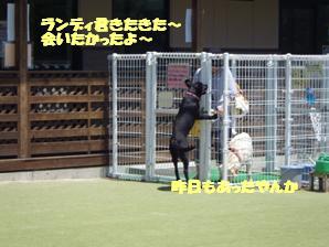 コピー ~ マー7ヶ月ぷーる2 019