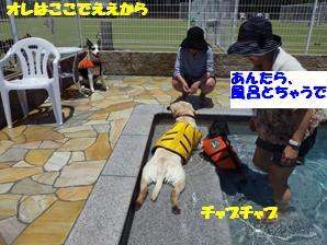 コピー ~ マー7ヶ月ぷーる2 046