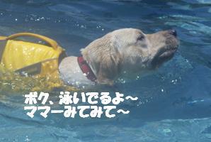 コピー ~ マー7ヶ月ぷーる2 062