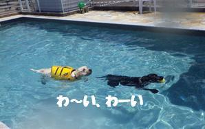 コピー ~ マー7ヶ月ぷーる2 090