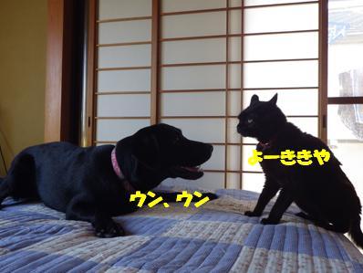 コピー ~ IMGP2143