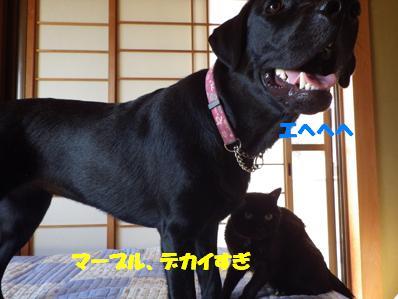 コピー ~ IMGP2139