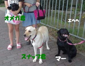 8/11スナップ君 (3)