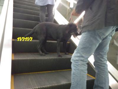 ペット博2012 (33)