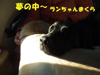 梅の郷9日 (1)