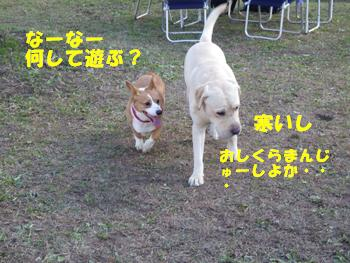 梅の郷9日 (6)