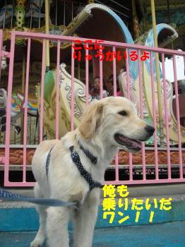 DSCN3513_convert_20120604203946.jpg