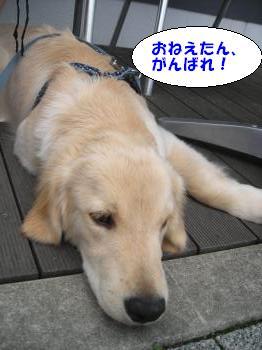 DSCN3586_convert_20120619215446.jpg