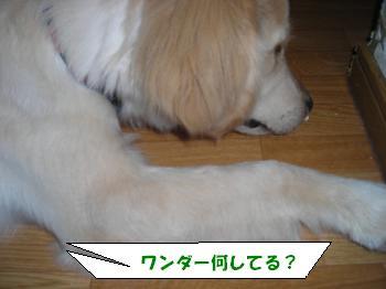 DSCN3627_convert_20120626223357.jpg