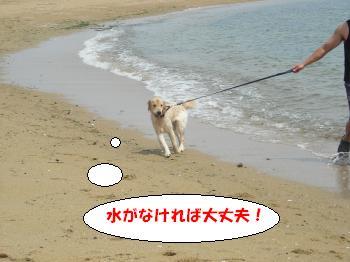 DSCN3638_convert_20120624220706.jpg