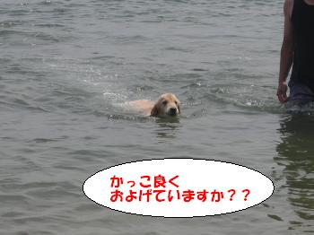 DSCN3639_convert_20120624220329.jpg