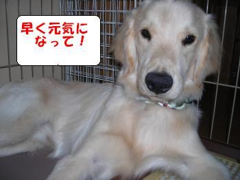DSCN3658_convert_20120703220410.jpg