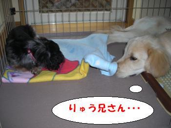DSCN3659_convert_20120703220319.jpg