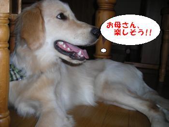 DSCN3674_convert_20120716220232.jpg