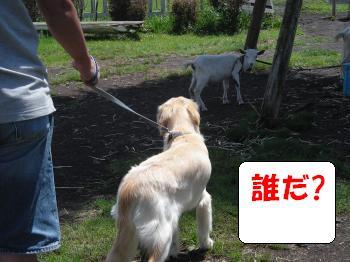 DSCN3731_convert_20120730143435.jpg