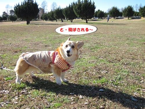IMG_4468_20130107205823.jpg