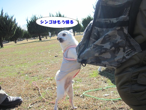 IMG_4491.jpg