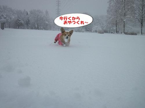 IMG_4874.jpg