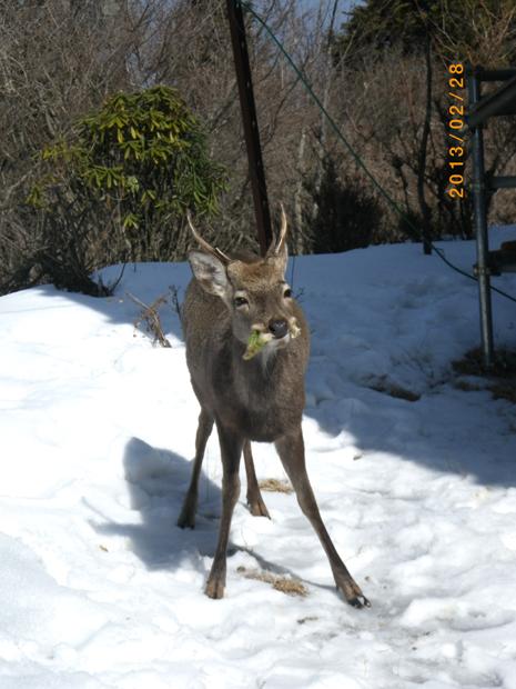 鹿との出遭遇