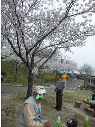 満開の桜にみとれています