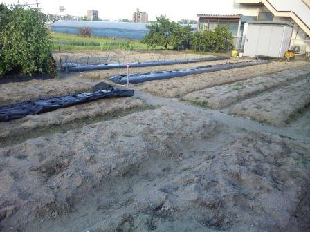 畑 最終日2 SH3J0507