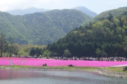 芝桜 1 SH3J0560