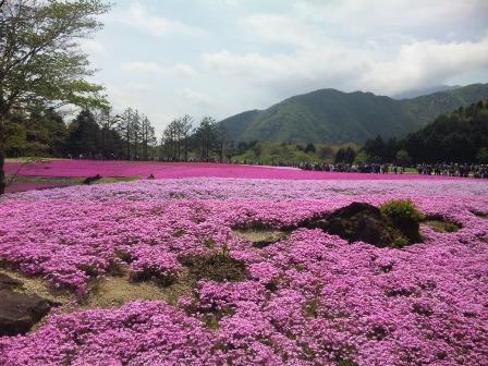 芝桜 2 SH3J0562