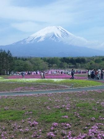 芝桜 5 SH3J0577