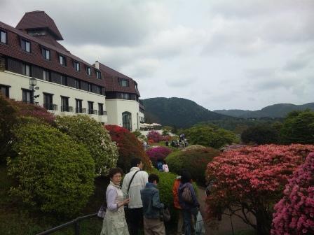 芝桜 つつじ 3 SH3J0601